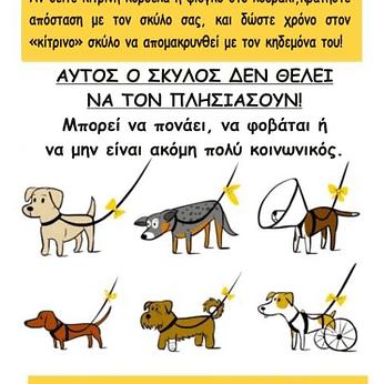 yellow dog project add